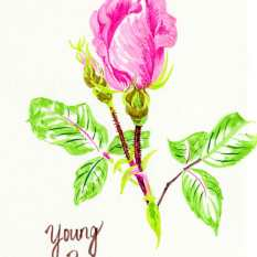 young-rose-resized